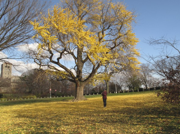 Late Fall in Ft. Tryon