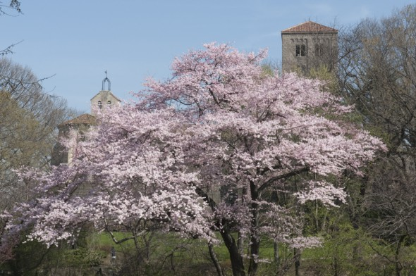 The Cloisters Museum in Spring